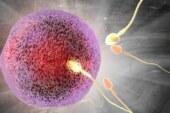 Мужской фактор. Ученые нашли важную причину снижения рождаемости