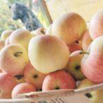 Цена яблок в России оказалась завышена в 350 раз