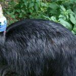 Ученые выяснили, какую птицу человек одомашнил раньше других
